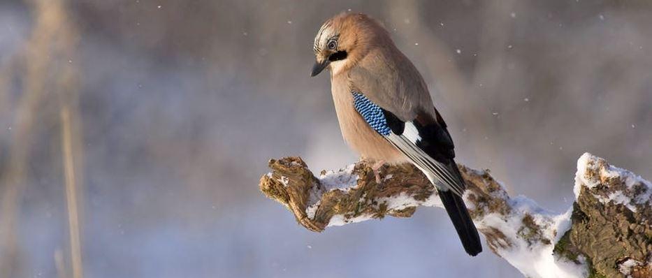 birdsnip